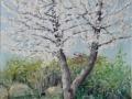 kirschbluete-auf-dem-Windberg.jpg
